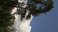 Stock Video Footage of Vertical HD 30p - thunderhead builds up behind tall pine trees