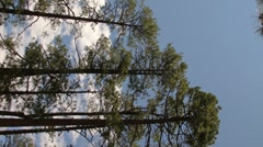 Vertical digital signage HD 30p pine trees and soft clouds - center panel Stock Footage