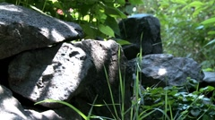 Rocks in nature Stock Footage