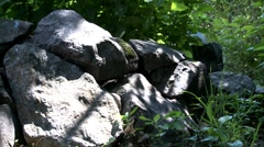 Rocks in nature forward Stock Footage