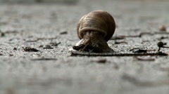 Snail exit house Stock Footage