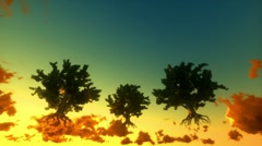 Floating trees and time lapse clouds, sunrise - stock footage