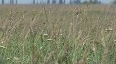 Beautiful dry grass Stock Footage