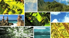 Montage of an Unpolluted Green Environment Stock Footage