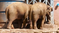 Two elephants and small elephant eat food in zoo Stock Footage