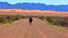 Cowboy Walks Desert Dirt Road 1 Stock Footage