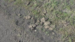 Dry dung Stock Footage