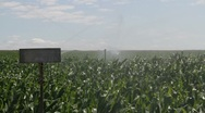 Stock Video Footage of Crop of corn watering