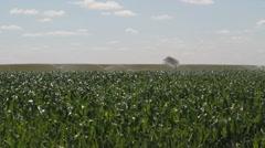 Crop of corn watering Stock Footage