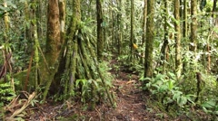 Walking through mossy tropical rainforest Stock Footage
