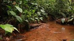 Walking along a rainforest stream Stock Footage
