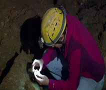 Cave Life Researcher Looking at Various Rocks - stock footage