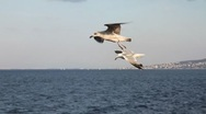 Seagull slow motion HD 1080p Stock Footage