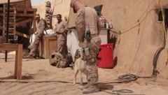 Marine Playing with Dog (HD) C Stock Footage