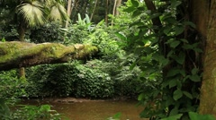 Tijuca Forest Stock Footage