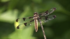 dragon fly.mp4 - stock footage