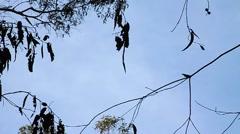 Perhoset kellua yli katsojan vasten sinistä taivasta. Arkistovideo