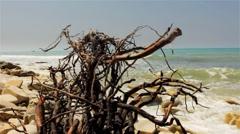 Dry dead snag on Sea Background Stock Footage