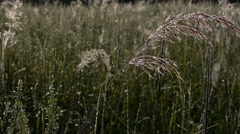 Dew On Prairie Grass Stock Footage