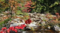 Red maple tree branch and Swift River, New Hampshire Stock Footage
