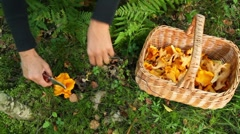 Picking Chanterelles Stock Footage