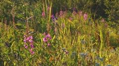 Wildflowers in Breeze Stock Footage