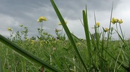 Stock Video Footage of Green Field with yelow flowers
