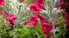 Flowers close-up Stock Footage