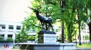 Stock Video Footage of Elk Fountain Portland