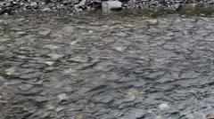 Fantastic Salmon Swims Upstream Stock Footage