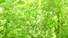 Fluff flies on background of fuzzy foliage Stock Footage