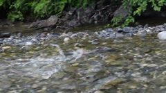 Salmon Propels Body Upstream Stock Footage
