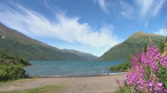 Mountain Lake and Fireweed Stock Footage
