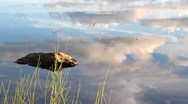 Stock Video Footage of Cloud reflections