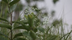 White flower in the wind 15s Stock Footage