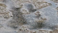 Rain on wet sand Stock Footage