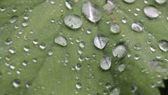 Rain droplets on leaf Stock Footage