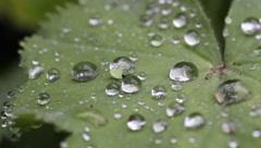rain droplets on leaf in the rain - stock footage