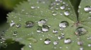 Stock Video Footage of rain droplets on leaf in the rain