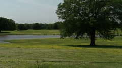 Pasture & Tree-Pond 5 Stock Settings HD Stock Footage