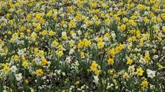 Beautiful Field of Flowers in Spring Season Stock Footage