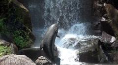 waterfall close up 3 - shatin , hong kong - stock footage