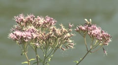 Plants by the river close up Stock Footage