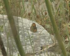 Butterflies on rock Stock Footage