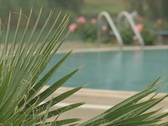 Change of focus from plant to swimming pool Stock Footage