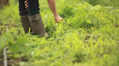 A person works in the garden wearing galoshes. Stock Footage
