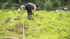A person works in a community garden wearing galoshes. Stock Footage