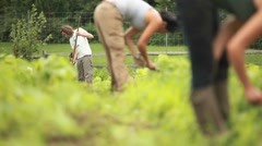 People work in a community garden. - stock footage