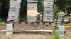 Beekeeper boxes in a garden. - stock footage
