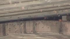 BATS FROM UNDER BRIDGE #3 - HD Stock Footage